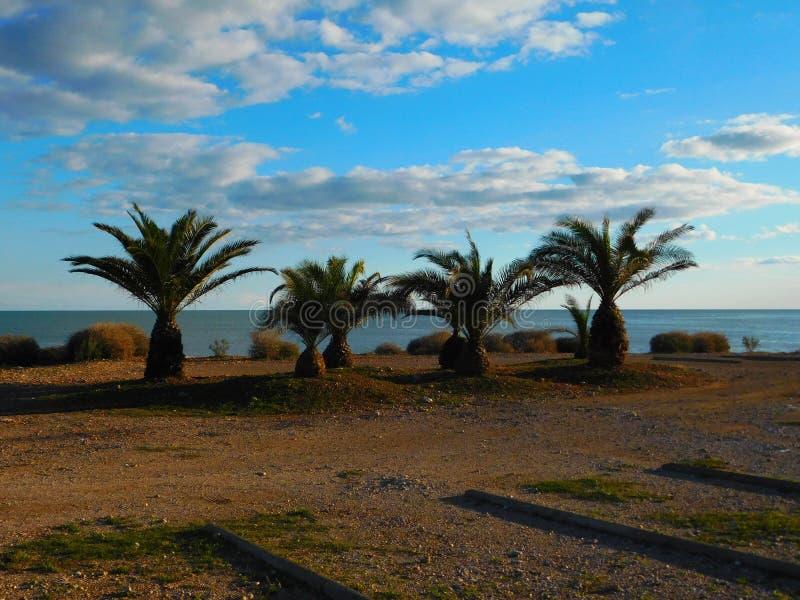 Quattro palme sulla spiaggia fotografia stock