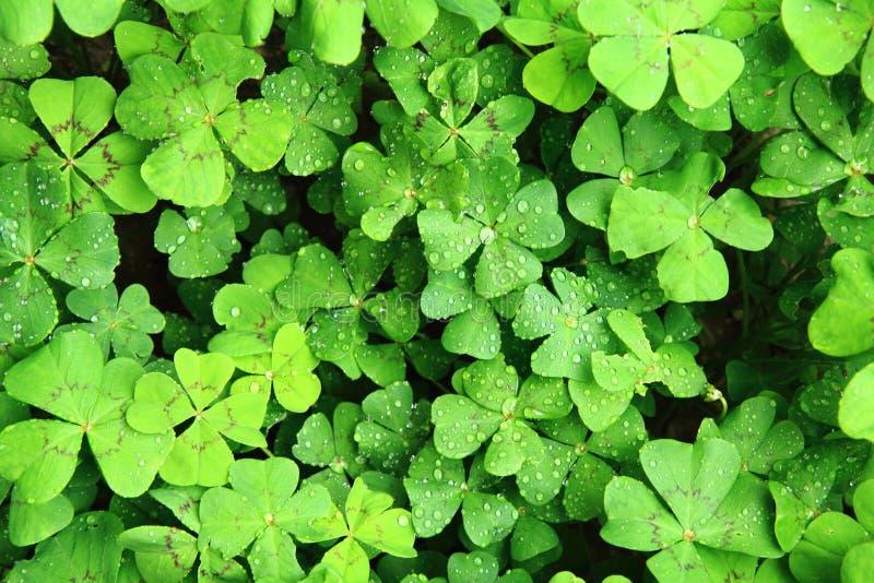 quattro piante delle foglie con le gocce di acqua illustrazione vettoriale