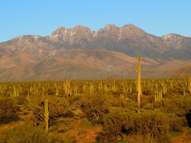 Quattro picchi e supporti del cactus del saguaro fotografia stock libera da diritti