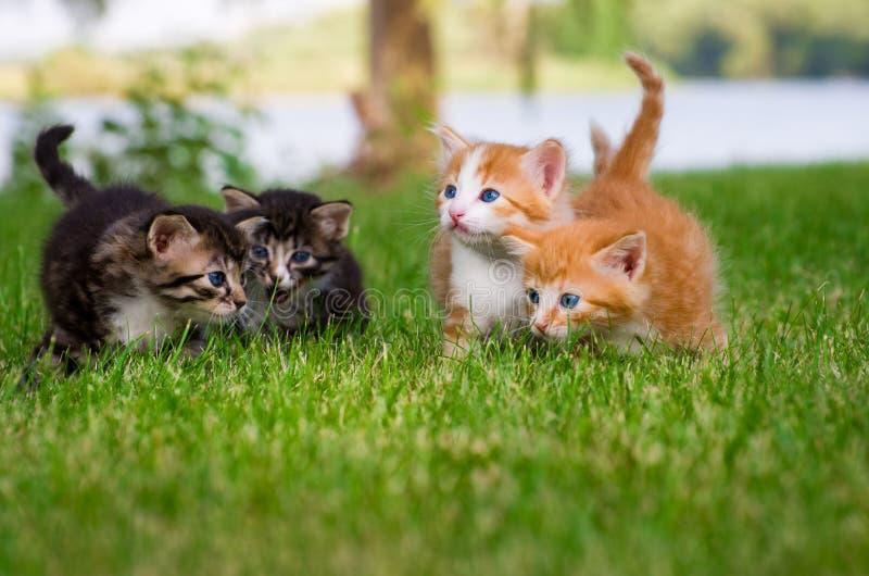 Quattro piccoli gattini in giardino fotografie stock
