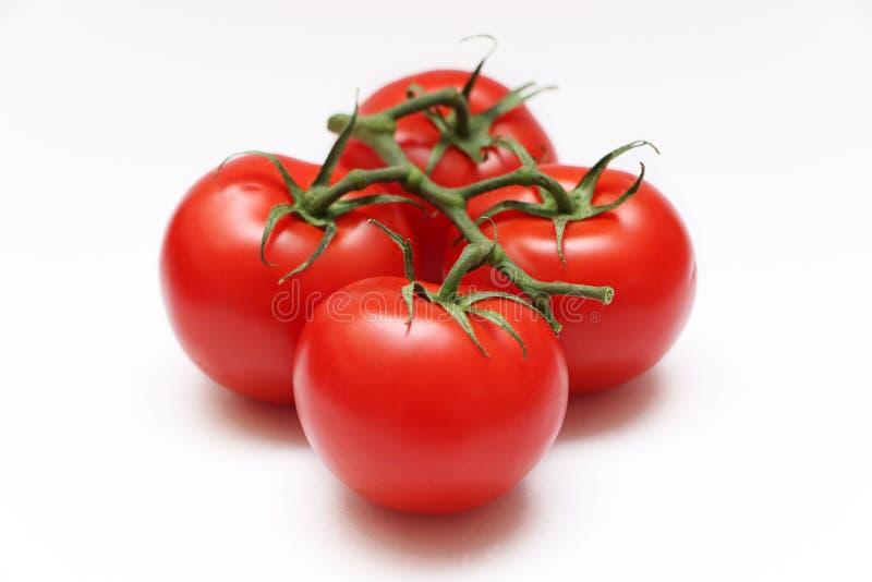 Quattro pomodori su una vite immagini stock