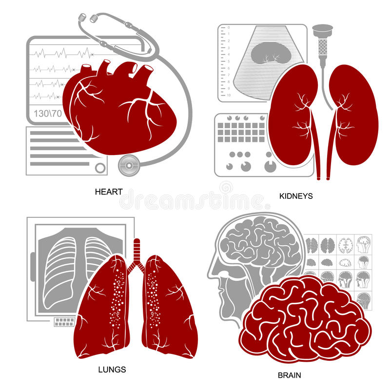 Quattro reni piani del cervello dei polmoni del cuore dell'icona della medicina di progettazione illustrazione vettoriale
