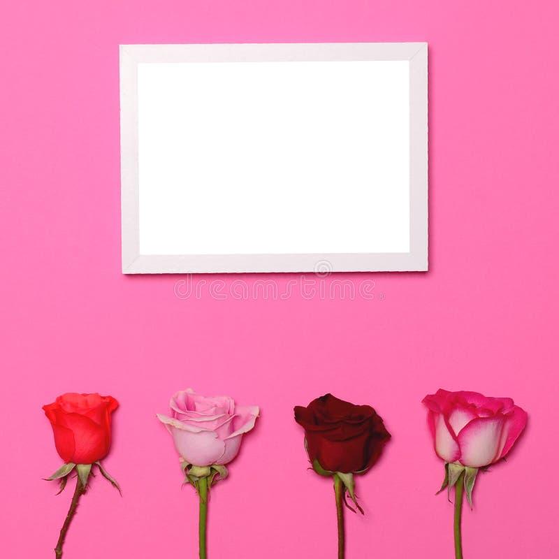 Quattro rose su fondo rosa pastello con la struttura in bianco della foto sopra - il concetto posto piano minimo d'avanguardia immagine stock libera da diritti
