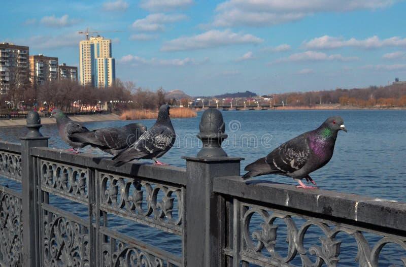 Quattro sedili blu-grigi contro lo sfondo del fiume e del cielo blu della molla immagini stock