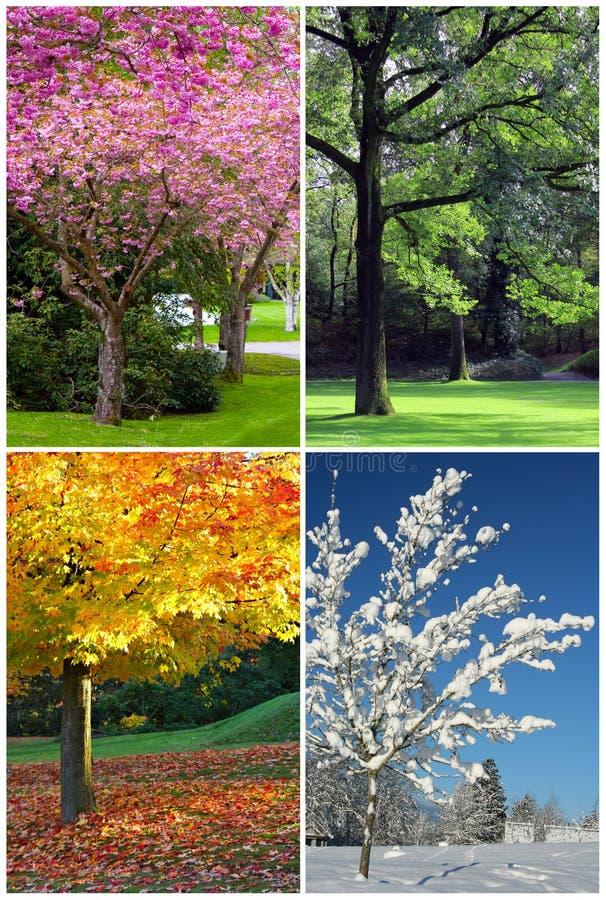 Quattro stagioni fotografia stock libera da diritti