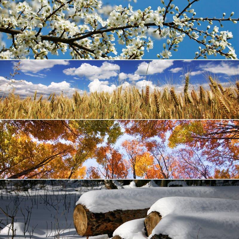 Quattro stagioni fotografia stock