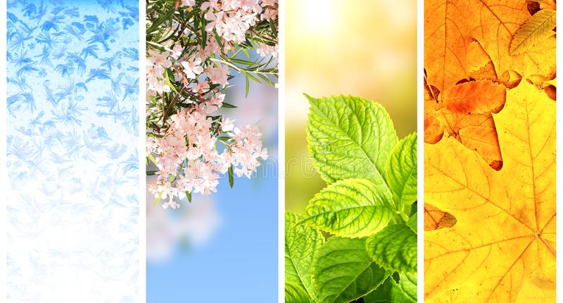 Quattro stagioni dell'anno fotografia stock libera da diritti