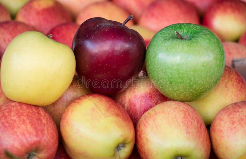 Quattro tipi differenti di mele mature fotografia stock libera da diritti