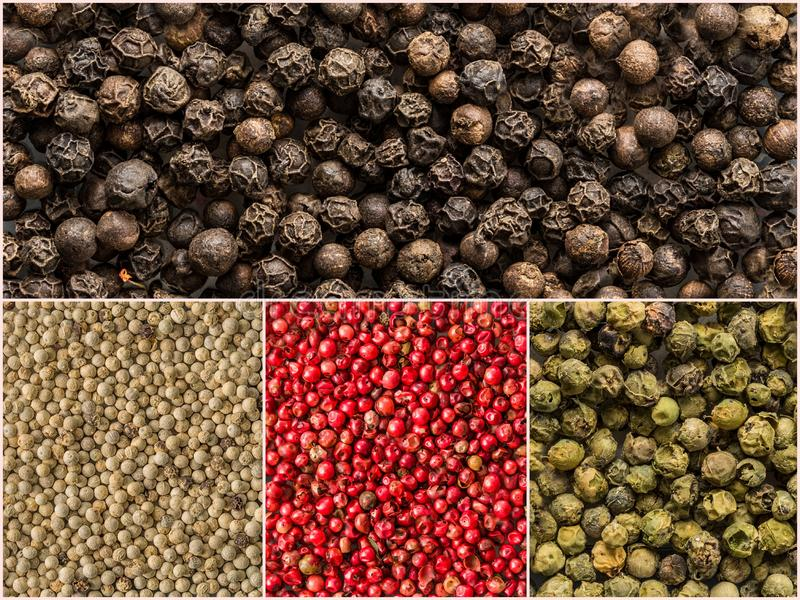 Quattro variazioni dei granelli di pepe Collage di varie spezie immagine stock libera da diritti
