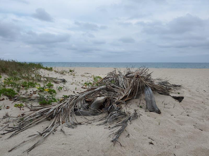 Que tarde de acalma??o pregui?osa na praia paradise fotografia de stock