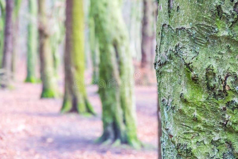 Que vert d'arbre d'écorcement photographie stock libre de droits