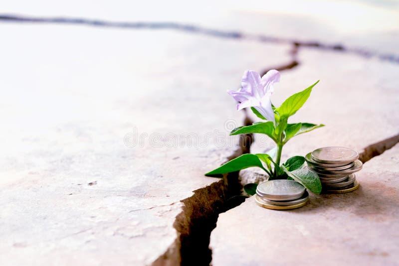 Quebra ascendente do assoalho da planta que cresce com conceito das moedas fotografia de stock
