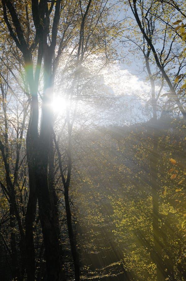 Quebra clara através dos ramos de árvore azerbaijan c?ucaso fotografia de stock