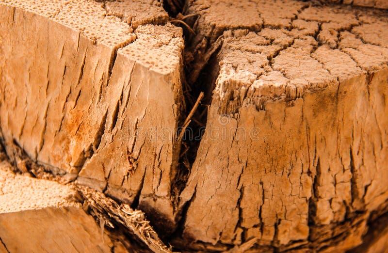 Quebra no close-up do tronco de árvore fotografia de stock royalty free