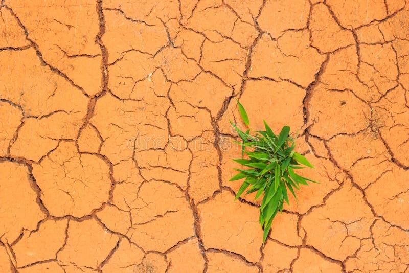 Quebras crescentes do solo seco da calha da plântula imagem de stock royalty free