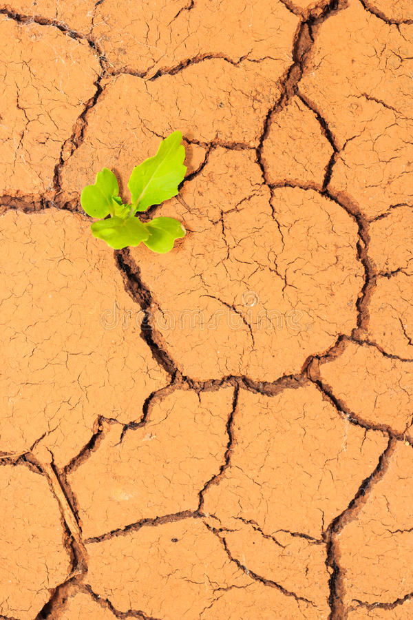 Quebras crescentes do solo seco da calha da plântula imagem de stock
