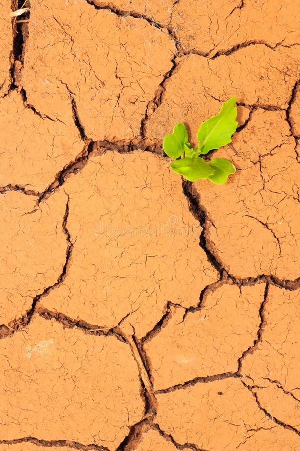 Quebras crescentes do solo seco da calha da plântula fotografia de stock