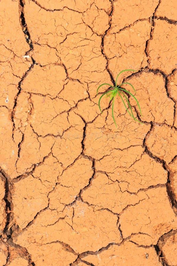 Quebras crescentes do solo seco da calha da plântula fotografia de stock royalty free