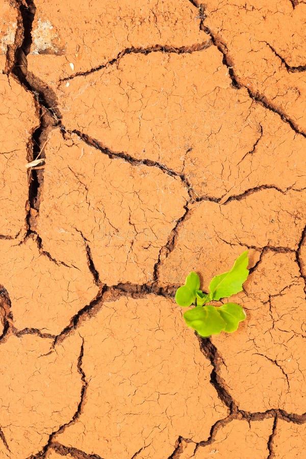 Quebras crescentes do solo seco da calha da plântula foto de stock royalty free