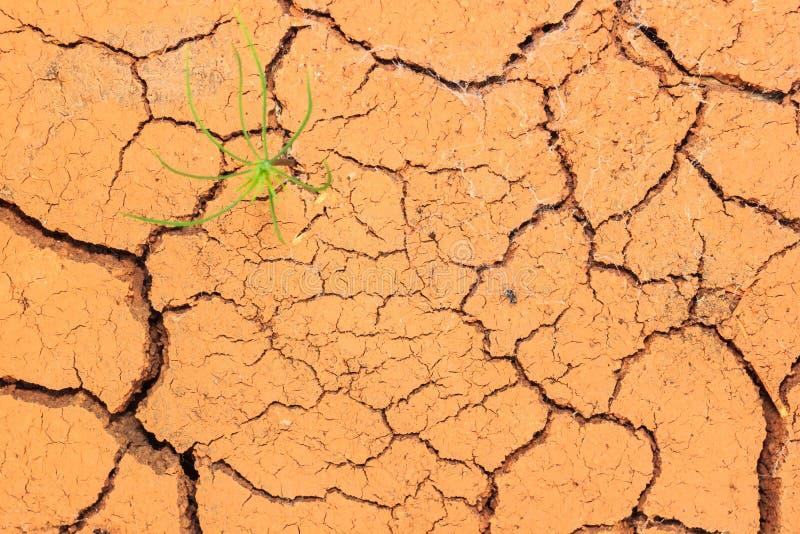 Quebras crescentes do solo seco da calha da plântula imagens de stock royalty free