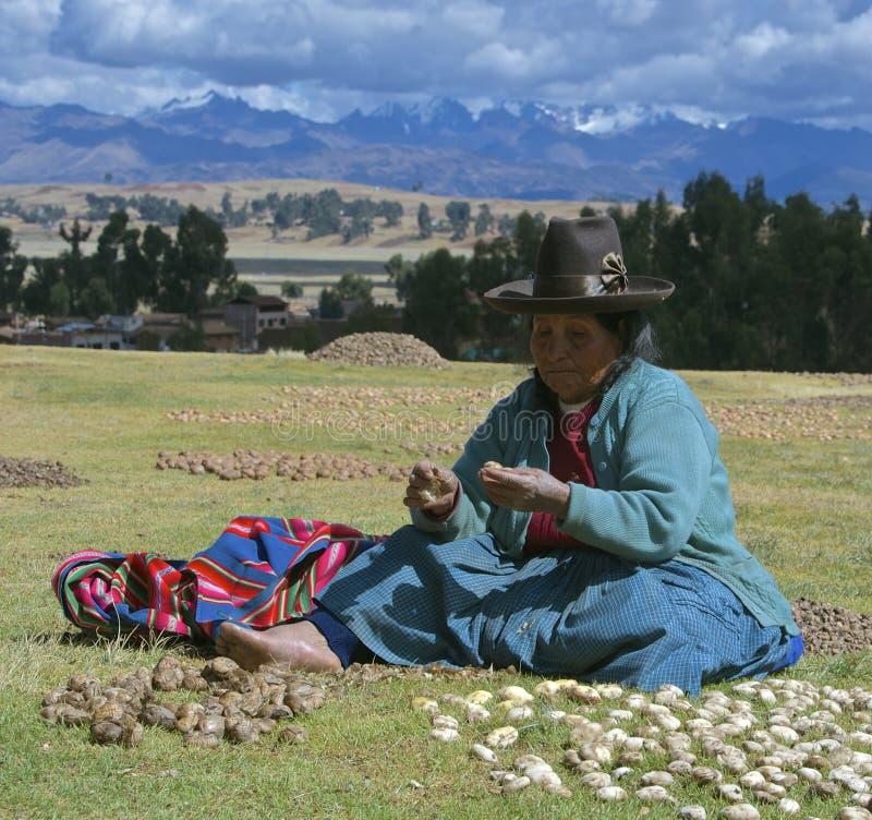 Quechua kvinna med torkade potatisar royaltyfri fotografi