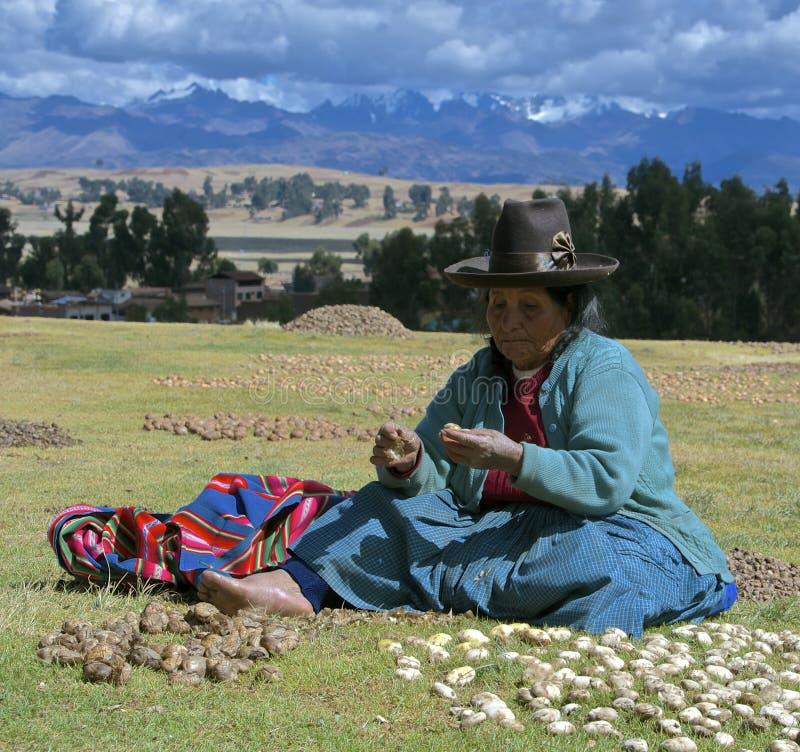 Quechua vrouw met droge aardappels stock afbeeldingen