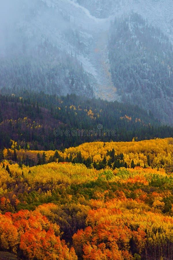 Queda acima Aspen da queda de neve imagens de stock