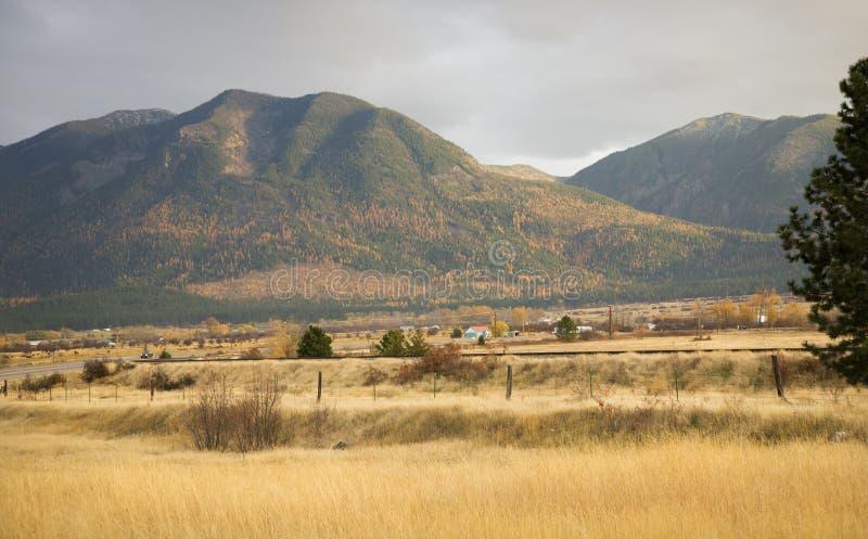 A queda amarela dos montes dos álamos tremedores da exploração agrícola colore Montana foto de stock royalty free