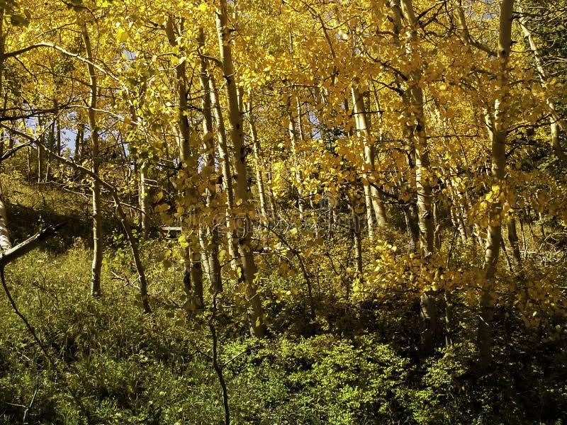 Queda Apens amarelo foto de stock royalty free