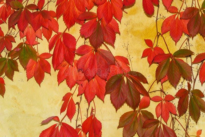 A queda bonita colore enfeitar as paredes de uma adega imagens de stock royalty free