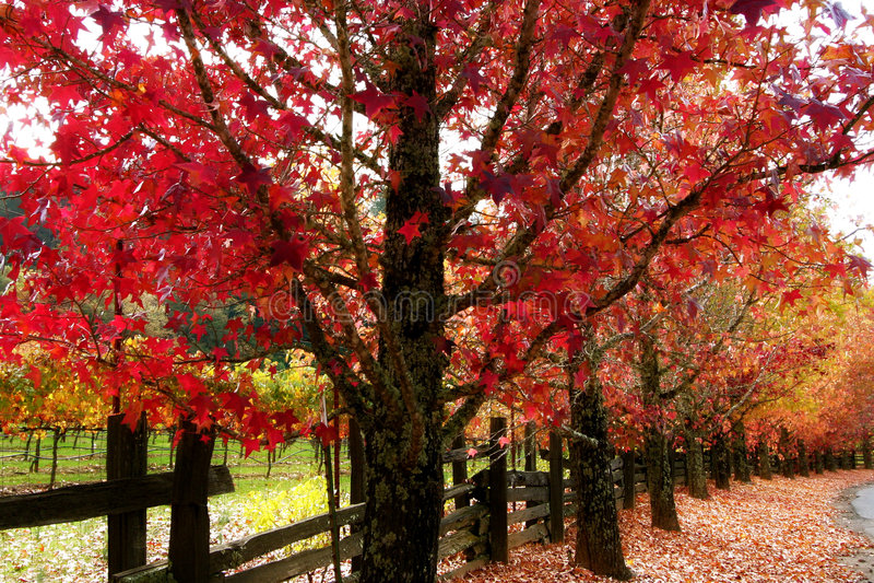 A queda colore o condado do vinho de Sonoma foto de stock