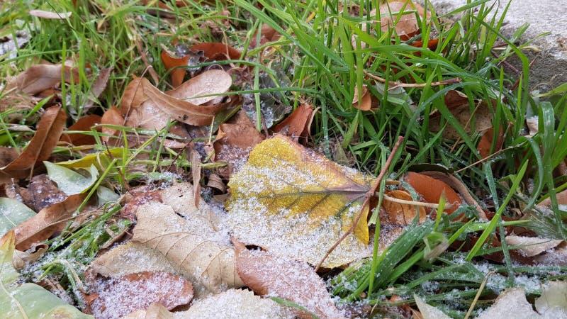 A queda colorida sae na terra com a primeira neve fotos de stock