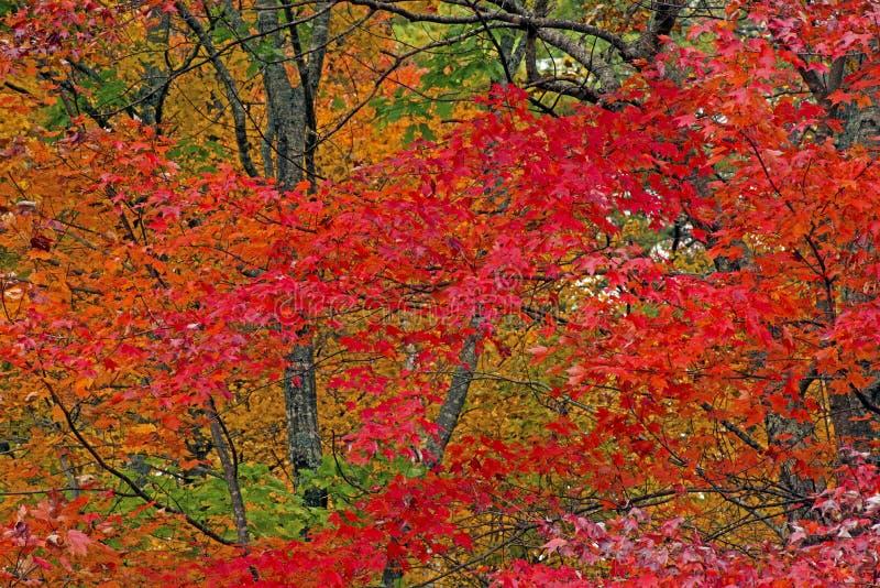 A queda coloriu as folhas em Great Smoky Mountains imagens de stock