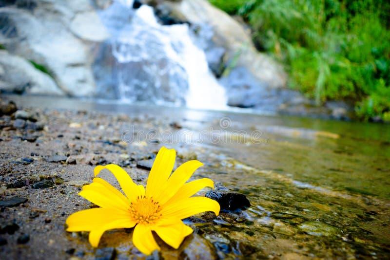 Queda da água atrás da paisagem da flor foto de stock royalty free