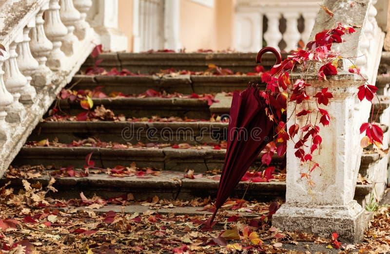 Queda da folha do outono O vermelho e o amarelo saem no sto velho destruído imagem de stock