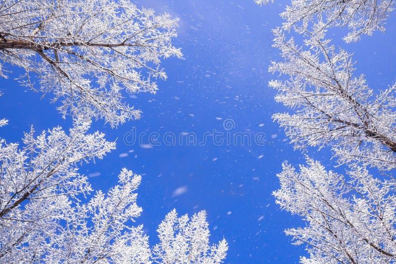 Queda da neve imagens de stock royalty free