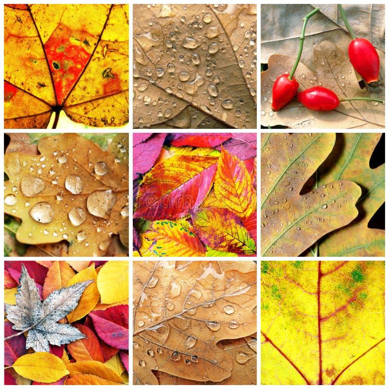 Queda das bagas da colagem do close up das folhas fotografia de stock royalty free