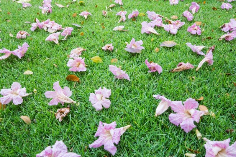 Queda das flores no gramado fotografia de stock royalty free