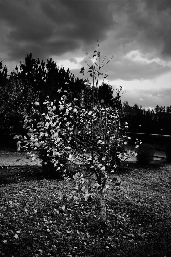 Queda das folhas em um dia sombrio do outono fotos de stock