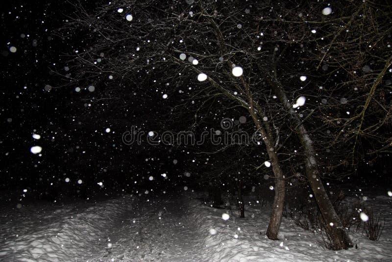 Queda de neve, blizzard, flocos da neve Paisagem da noite do inverno com árvores e estrada fotografia de stock