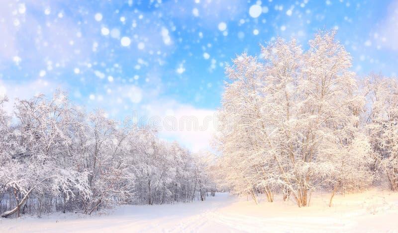 Queda de neve do Natal no parque fotografia de stock royalty free
