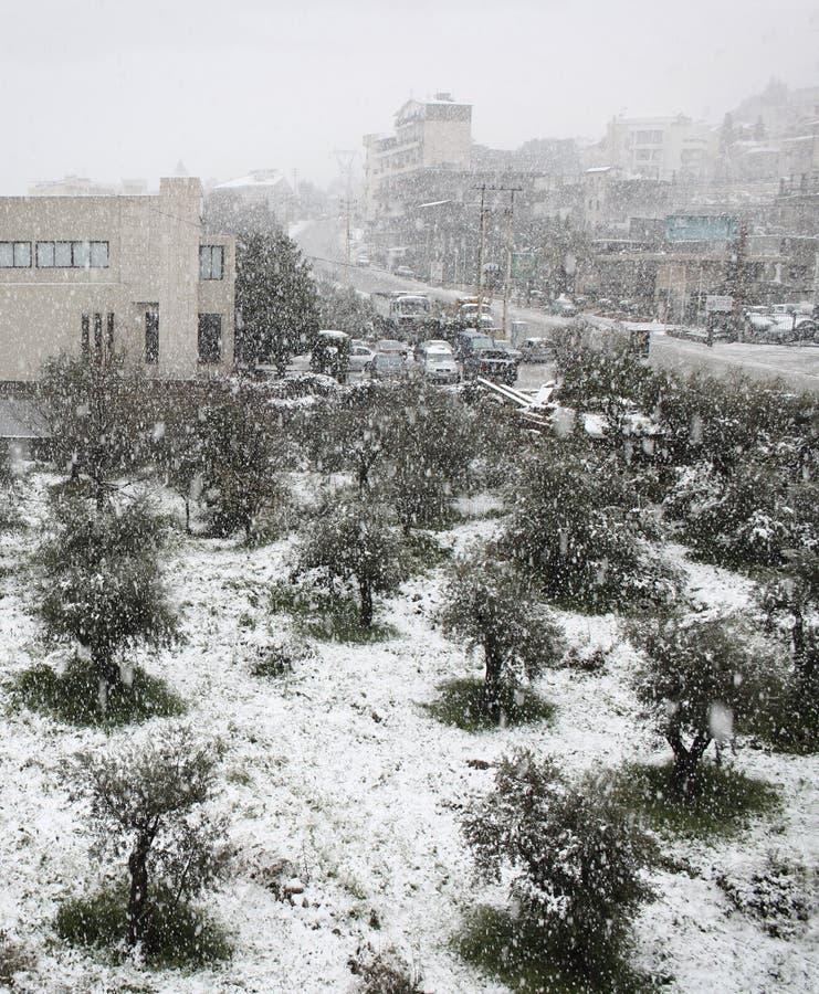 Queda de neve em azeitonas e em estrada imagem de stock royalty free
