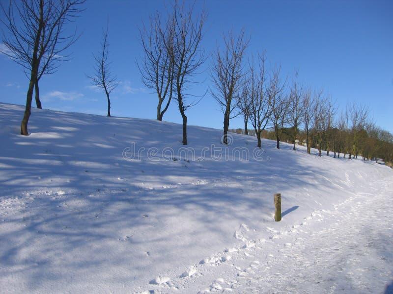 Queda de neve em um dia de inverno imagens de stock royalty free