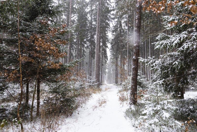 Queda de neve na paisagem do inverno da floresta Região boêmia sul fotografia de stock