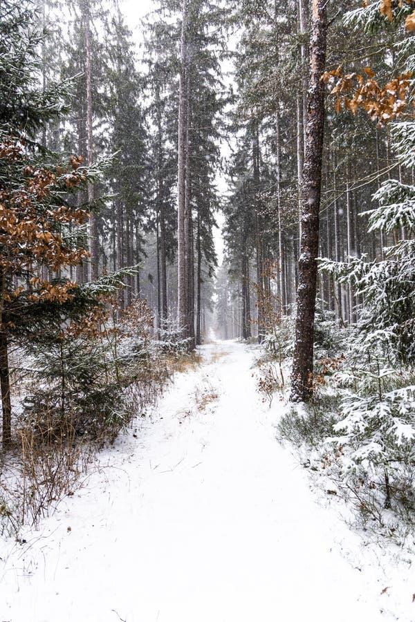 Queda de neve na paisagem do inverno da floresta Região boêmia sul fotografia de stock royalty free