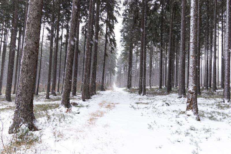 Queda de neve na paisagem do inverno da floresta Região boêmia sul fotos de stock