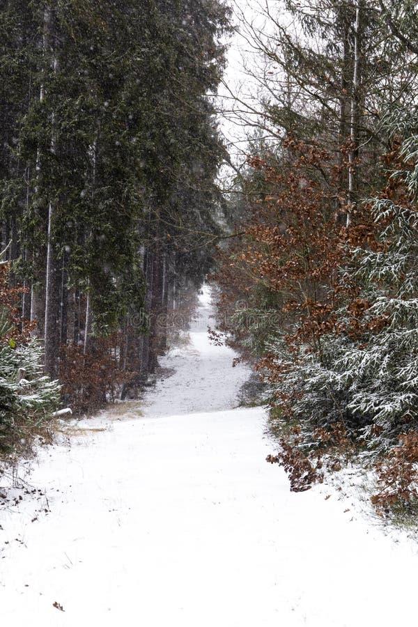 Queda de neve na paisagem do inverno da floresta Região boêmia sul foto de stock