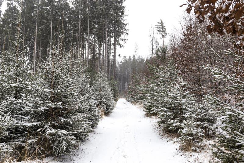 Queda de neve na paisagem do inverno da floresta Região boêmia sul imagens de stock
