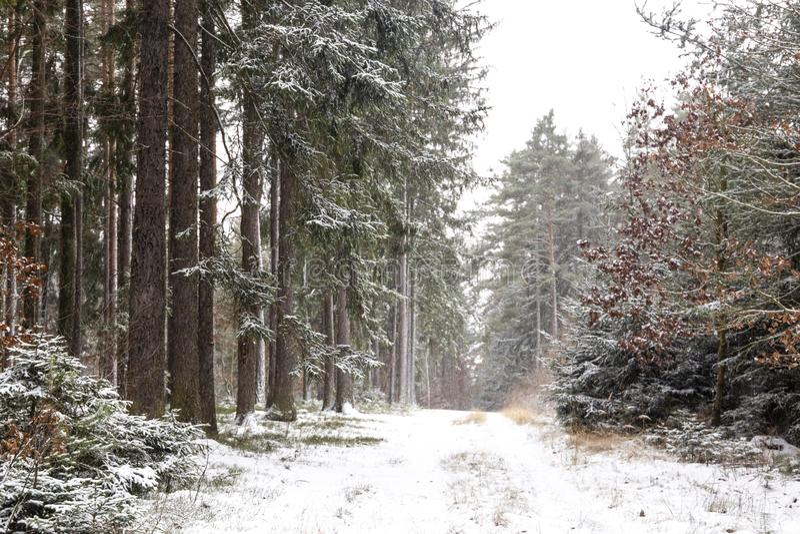 Queda de neve na paisagem do inverno da floresta Região boêmia sul imagens de stock royalty free