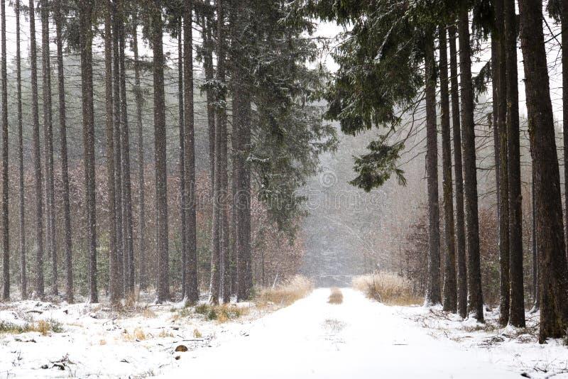 Queda de neve na paisagem do inverno da floresta Região boêmia sul imagem de stock